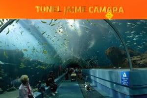tunel aquario